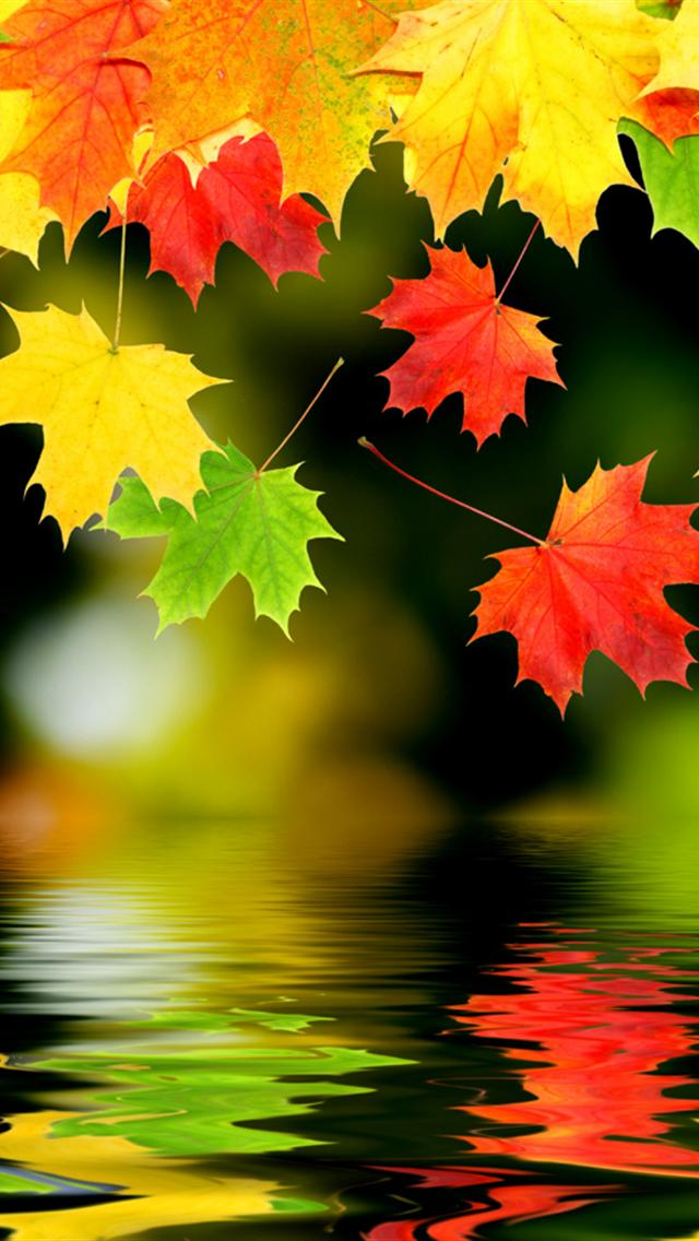 iPhone Fall Wallpaper 11