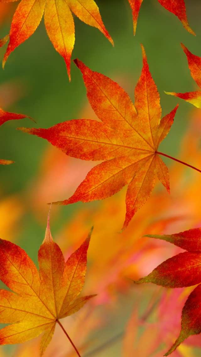 iPhone Fall Wallpaper 23