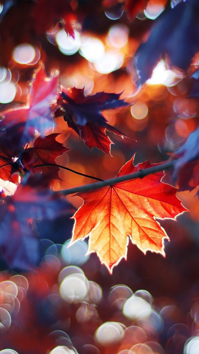 iPhone Fall Wallpaper 25