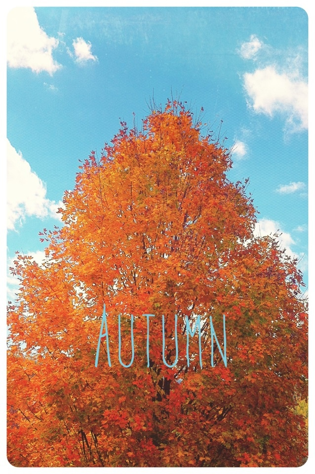 iPhone Fall Wallpaper 28