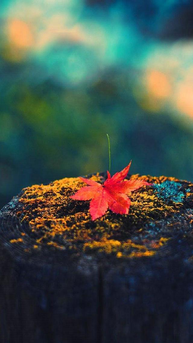 iPhone Fall Wallpaper 7