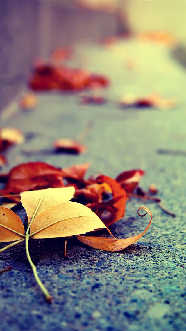 iPhone Fall Wallpaper 8